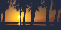 silhouettes of palm trees on a beach at sunset
