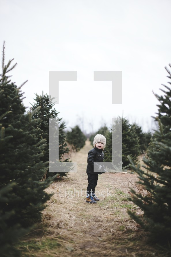 a toddler boy in a Christmas tree lot