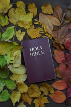 Holy Bible surrounded by fall leaves  - 