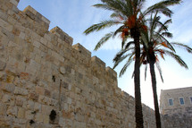 Palm tress outside the New Gate, Jerusalem old city walls