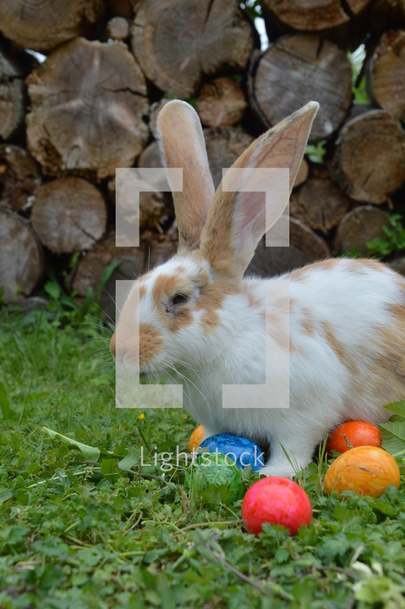 bunny and Easter eggs in grass