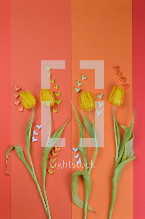 tulip flowers on red and orange with hearts