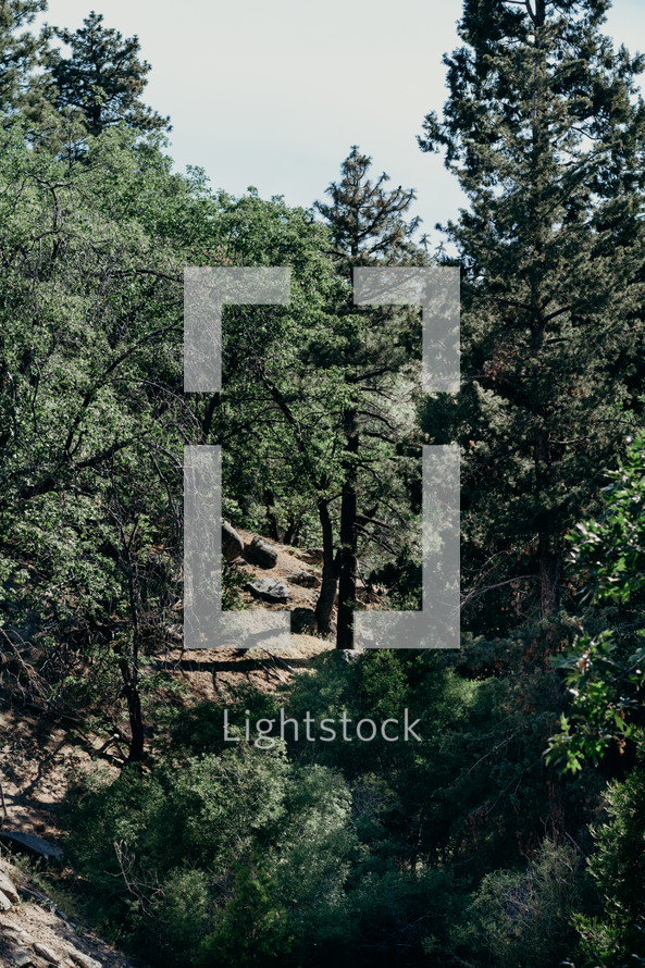 trees on a rocky slope