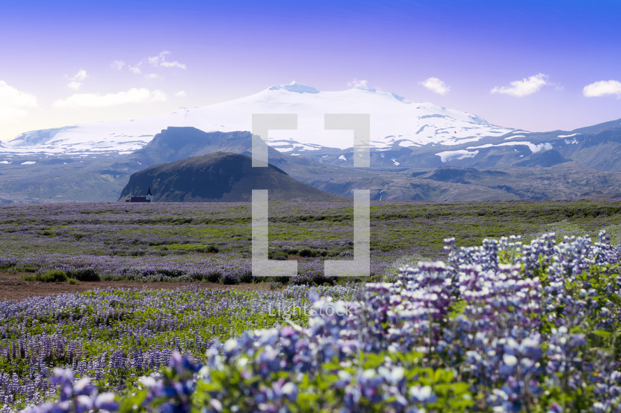 meadow of purple flowers and distant church with mountains