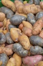 multicolored potatoes