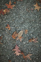 fall leaves on the pavement