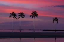 palm trees against a purple sky