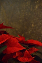 bright red Christmas star. 
