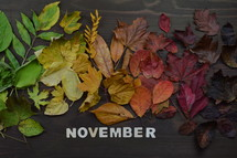 colorful autumn leaves in color gradient on brown wood with the word NOVEMBER in wooden pieces