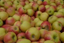 rich harvest of apples