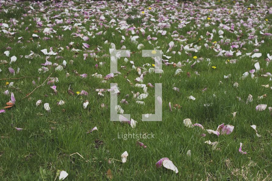 flower petals in the grass