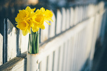 daffodils in a fence post