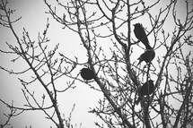 birds in a budding tree