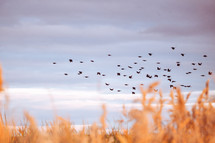 birds flying over a field