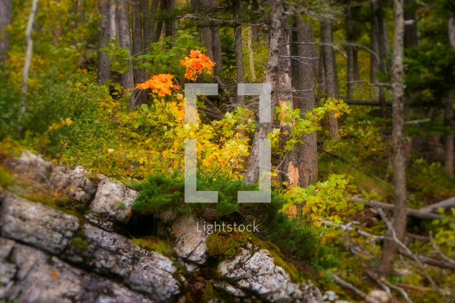 rock in a forest