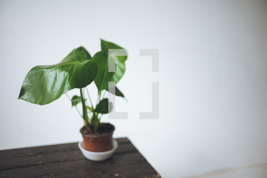 house plant on a trunk
