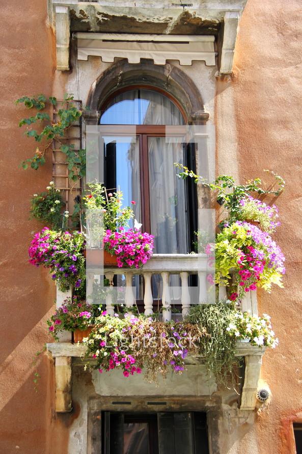 Flowers in bloom on a veranda.