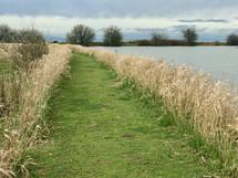 green path through tall brown grasses