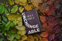 fall leaves border around a Bible - 