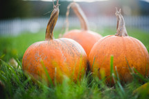 three orange pumpkins in green grass