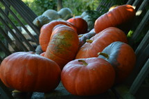 big orange and green pumpkins in a wagon