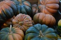 big orange and green pumpkins - Cucurbita moschata - musquee -  musque de Provence pumpkin