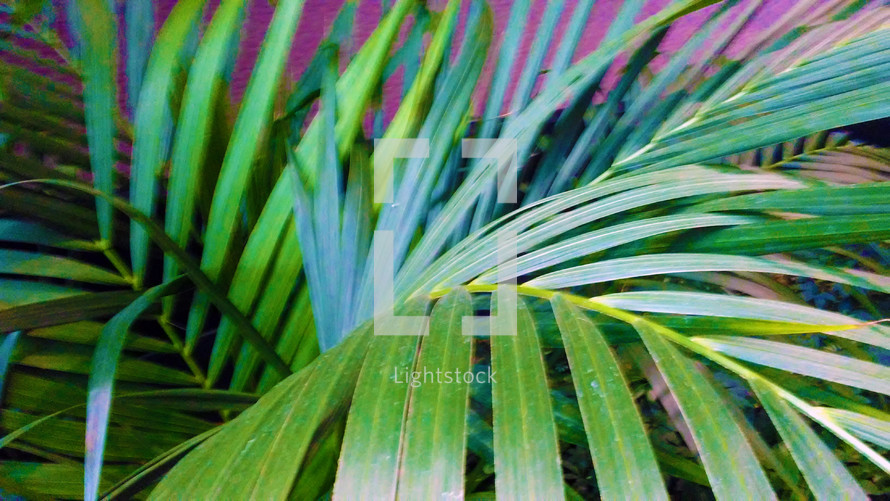 Green Palm Fronds reflecting light and sun in a tropical setting.