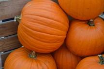 orange pumpkins in a wagon