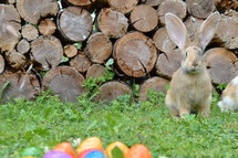 a rabbit and Easter eggs in grass