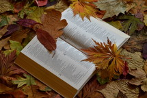 bible open at Isaiah 64 between colorful autumn leaves.