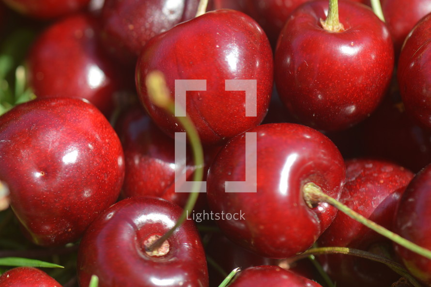 Fresh cherries.