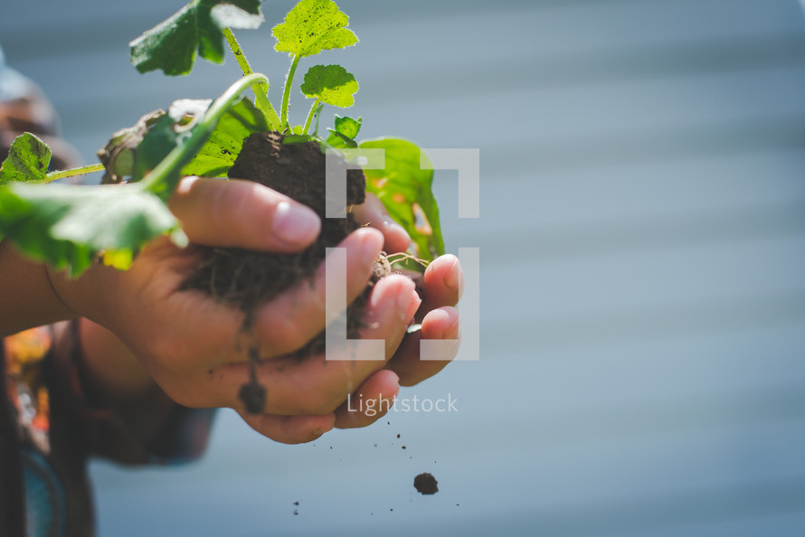 a boy holding a plant and clump of dirt