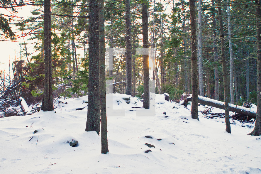 Sunrise on snow covered ground in forest of trees.
