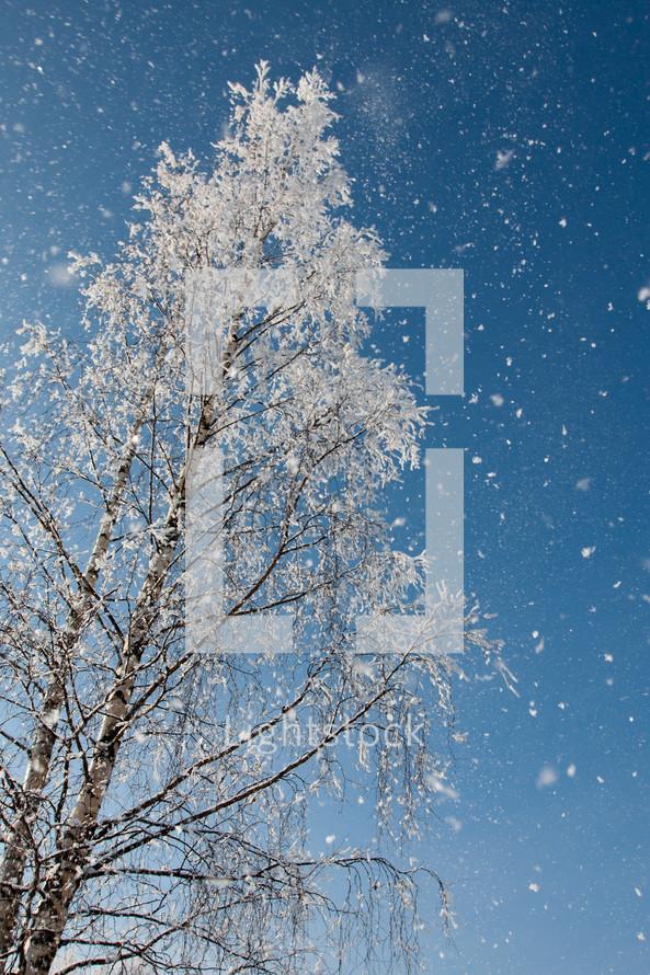 Snow fall on a dormant tree.