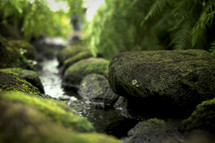 moss on rocks in a creek