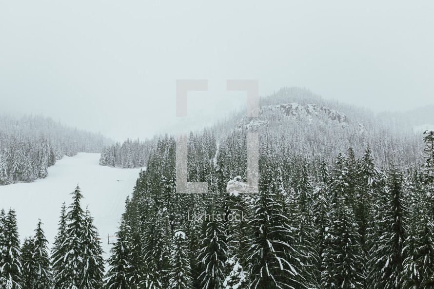 snow on a mountain forest