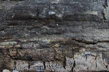 Weathered tree bark.