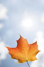 single falling autumn leaf