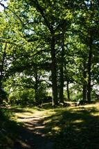 path through a summer forest