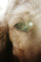 close-up of a dog's eye