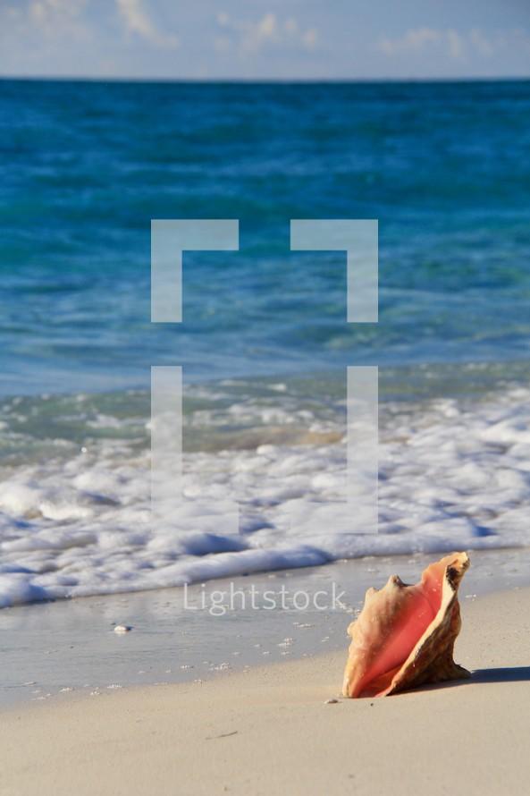 Conch shell on a sandy beach