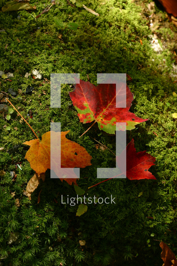 fall leaves on mossy ground