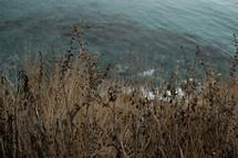 tall brown grasses along a shore