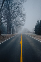 fog over a road lined by bare trees in winter