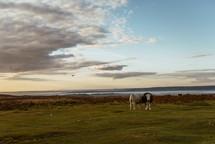 cattle along a shoreline