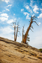 trees on a slope of a mountainside | Nature | Outdoors | Dead Trees | Landscape | Background | Still Standing