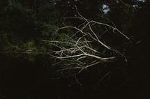 fall tree in a lake