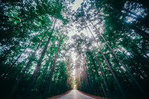 road through a forest
