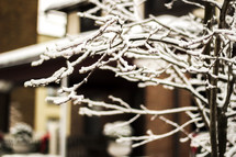 Ice cover branches of a tree