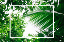 green palm leaves background with frame
